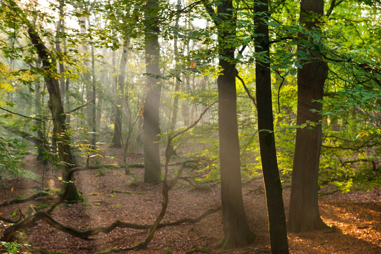 Natural beauty in the Veluwe hills