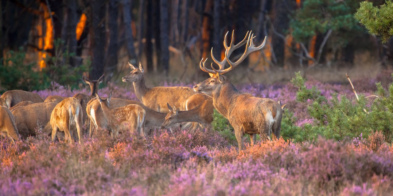 The oldest forest in the Veluwe